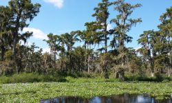 Swamp Tour & Airboat Tour