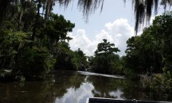 Bayou Swamp & Creole Plantation Tour